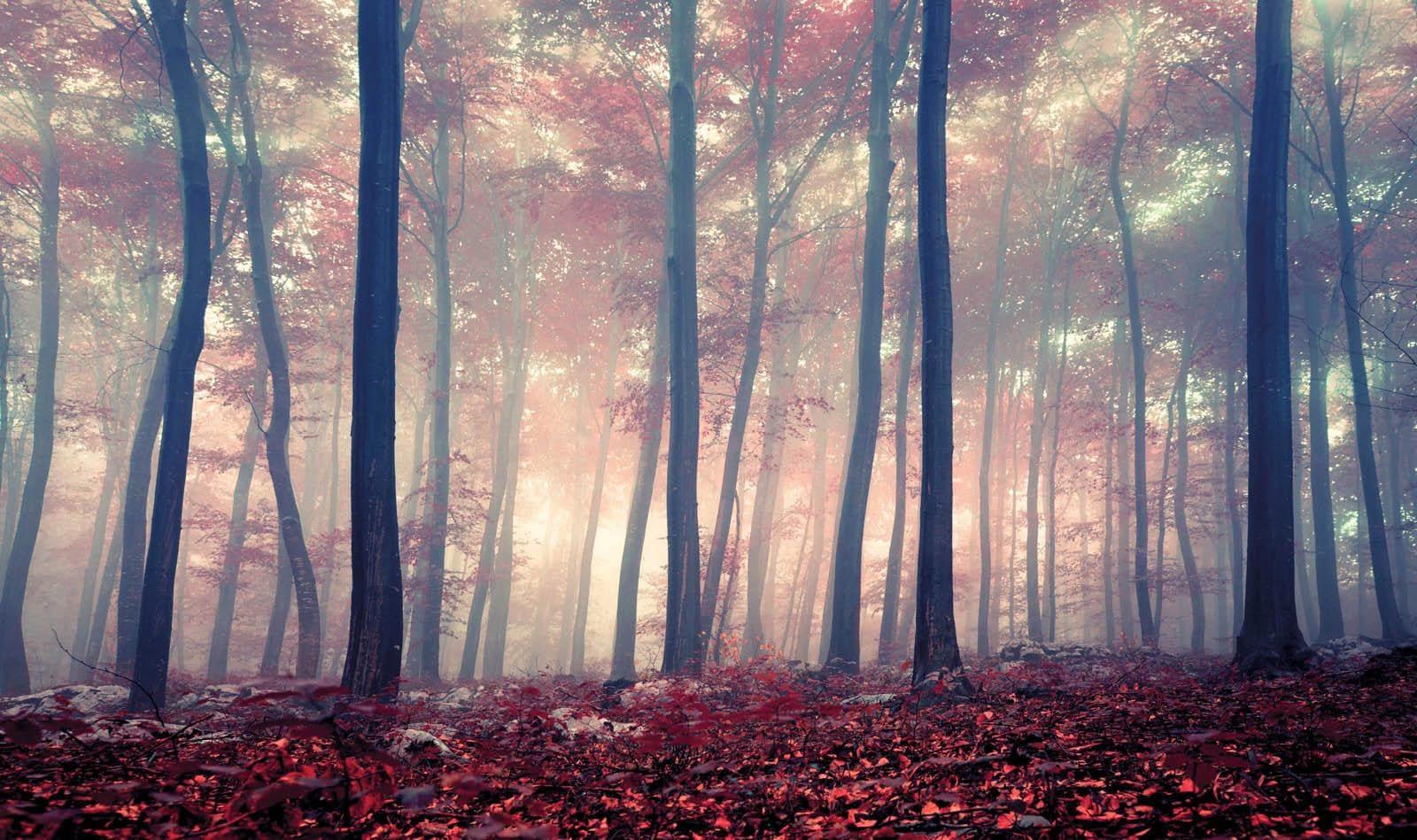 Home affaire Deco-Panel Colored Forest | Dekoration > Bilder und Rahmen > Bilder | Rot | Mdf | Home Affaire