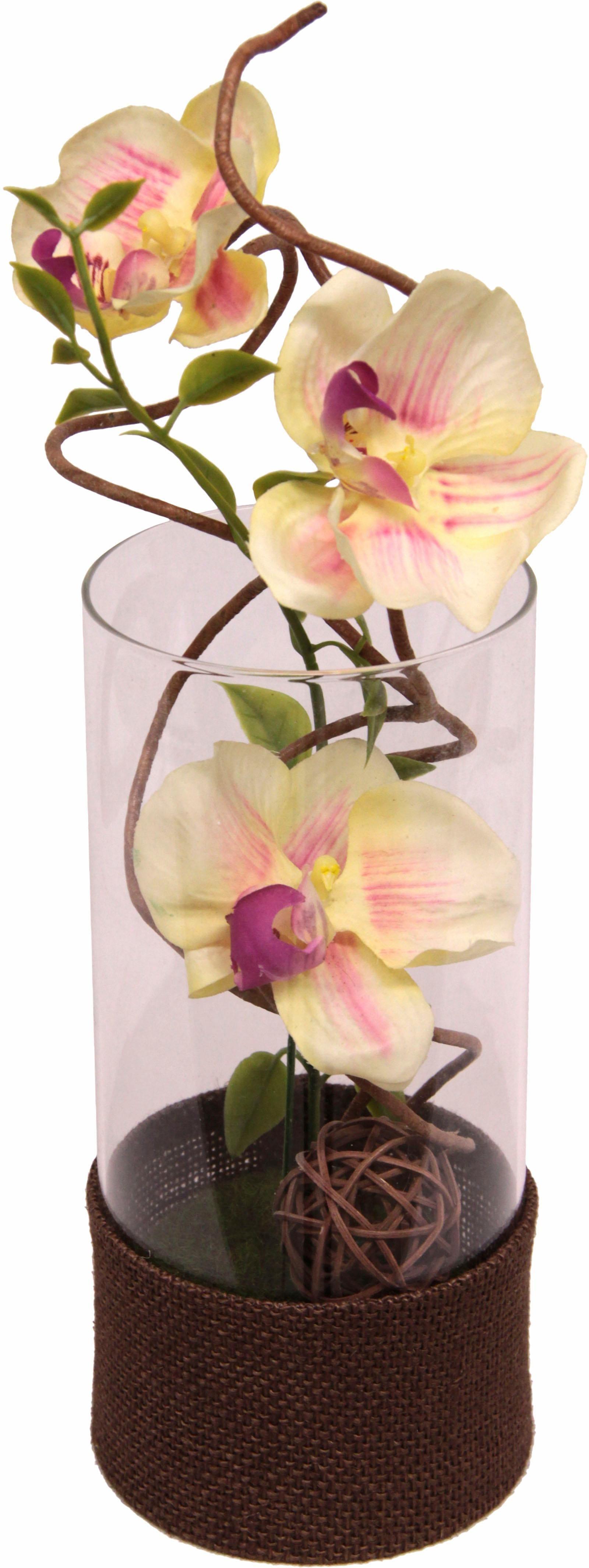Home affaire Kunstpflanze Orchidee Technik & Freizeit/Heimwerken & Garten/Garten & Balkon/Pflanzen/Kunstpflanzen/Kunst-Orchideen