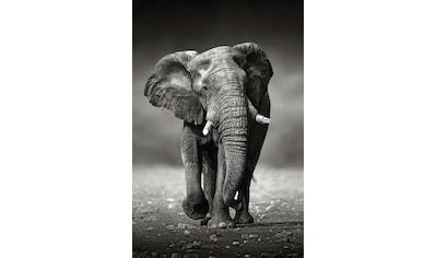 Reinders! Deco-Panel »Elefant Wanderung« kaufen