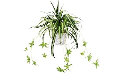 I.GE.A. Kunstpflanze »Wasserlilie«, im Übertopf kaufen