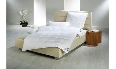 4 - Jahreszeitenbett, »First Class«, f.a.n. Frankenstolz, Bezug: 100% Baumwolle kaufen