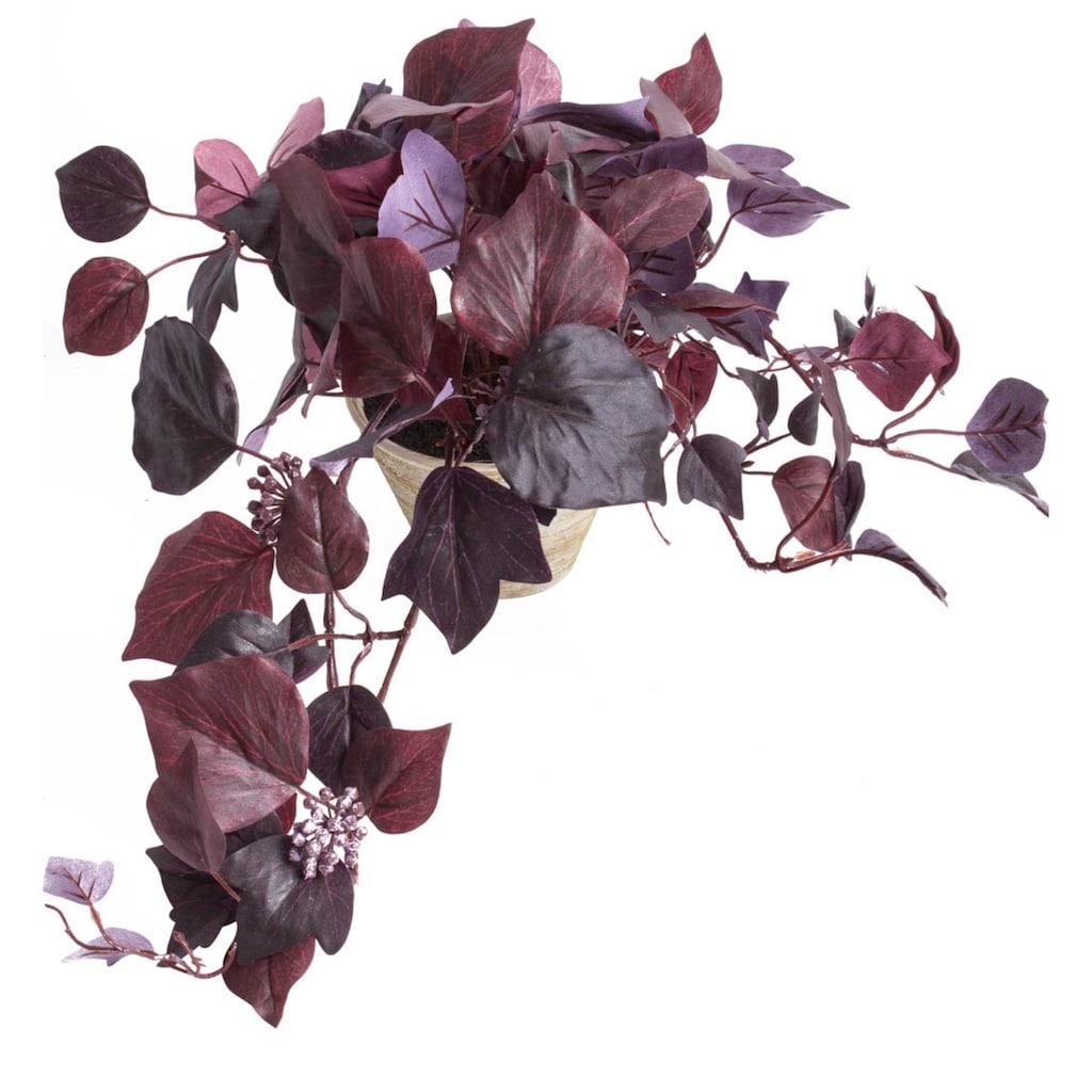 Botanic-Haus Künstliche Zimmerpflanze »Hängebusch«