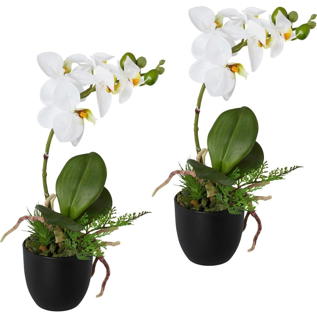 Creativ green Kunstorchidee »Phalaenopsis«, 2er Set, im Kunststofftopf