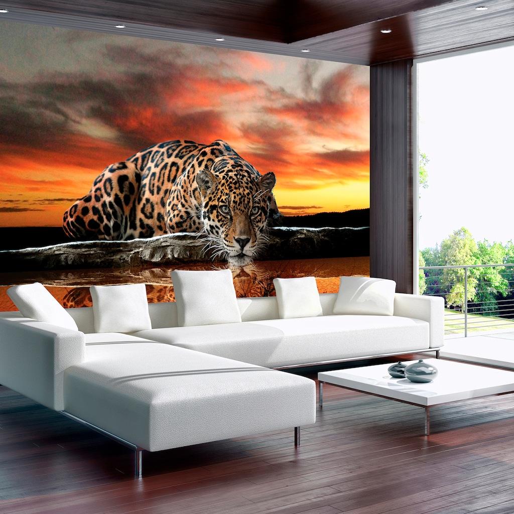 Consalnet Fototapete »Jaguar Sonnenuntergang«, Motiv