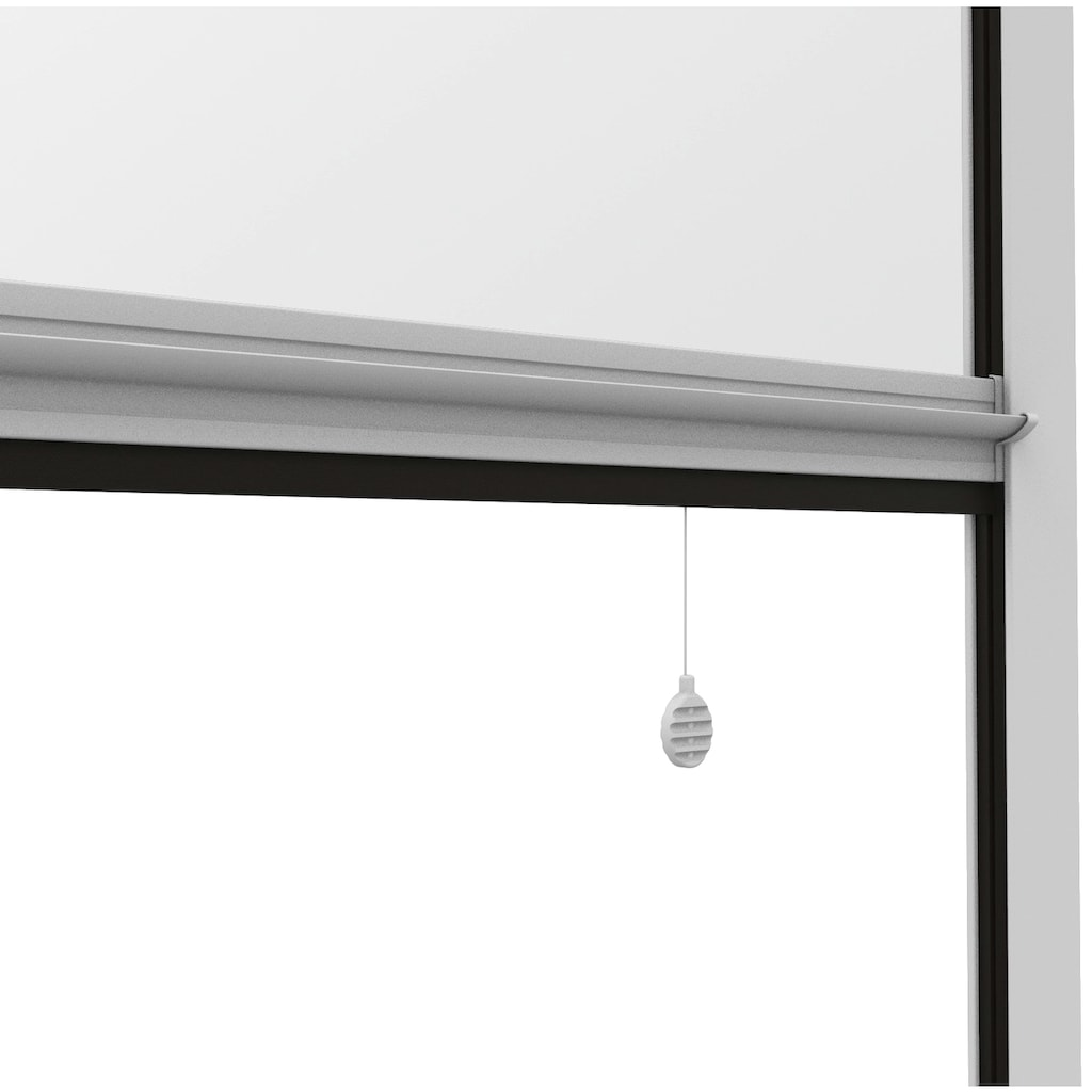 Windhager Insektenschutz-Rollo »Mosquito Stop«, BxH: 160x160 cm