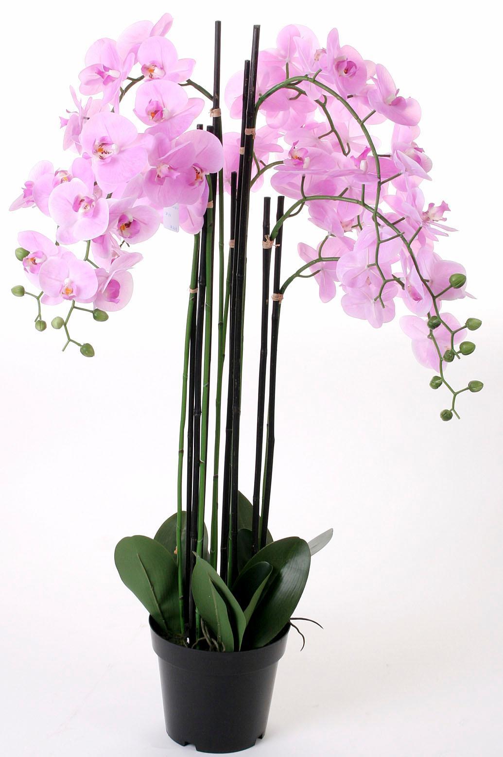 Kunstorchidee Orchidee XXL Technik & Freizeit/Heimwerken & Garten/Garten & Balkon/Pflanzen/Kunstpflanzen/Kunst-Orchideen