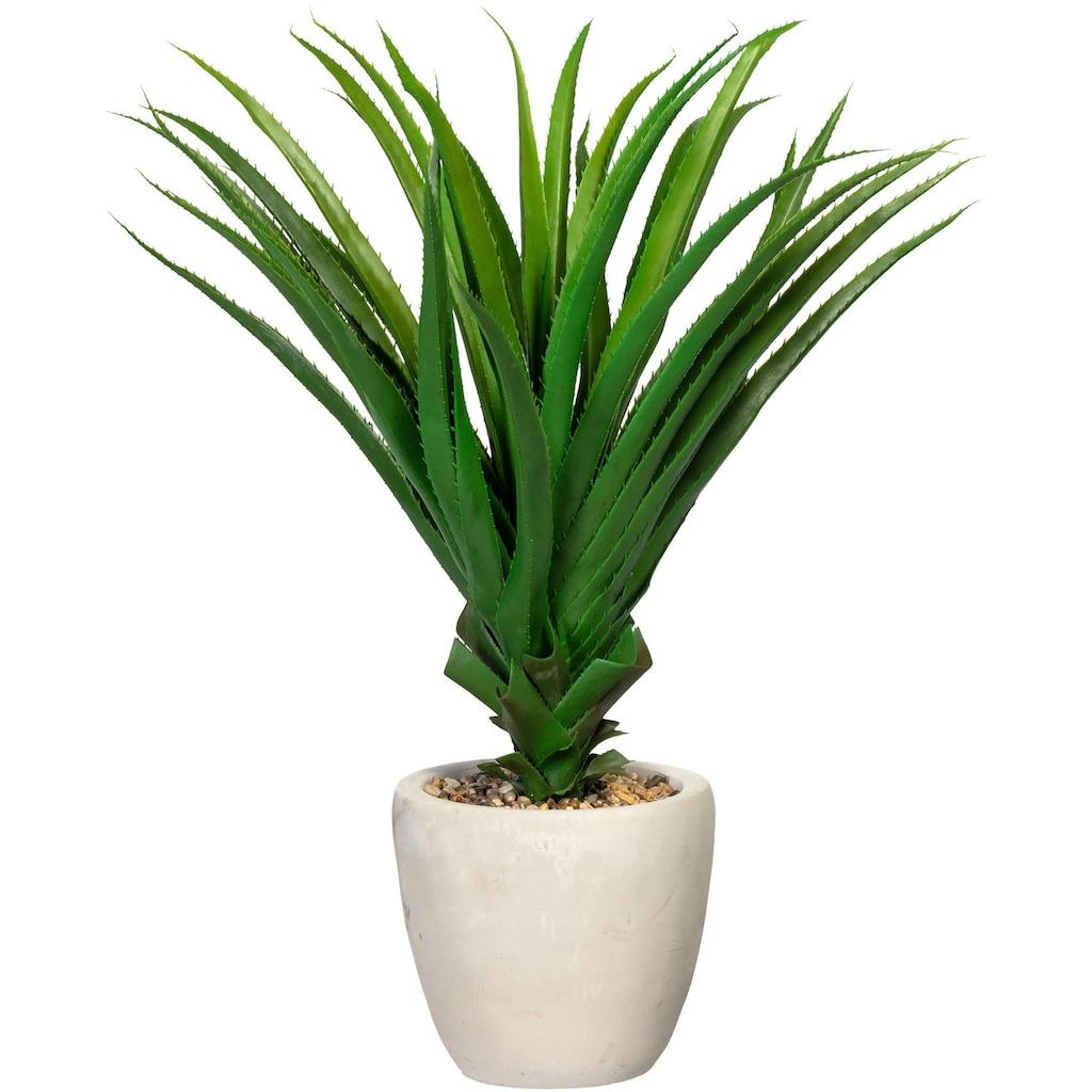 Creativ green Künstliche Zimmerpflanze »Pandanus multispicatus«, im Zementtopf