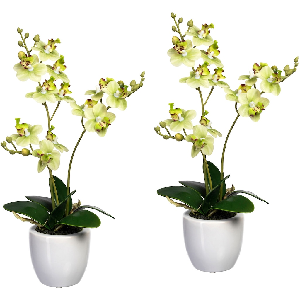 Creativ green Kunstorchidee »Phalaenopsis«, im Keramiktopf, 2er Set