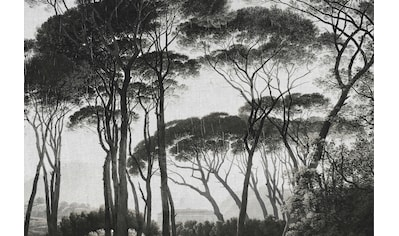 ARCHITECTS PAPER Fototapete »Atelier 47 Treetops 2«, Wald kaufen