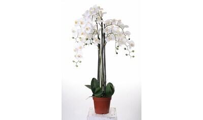 Kunstorchidee »Orchidee XXL« kaufen