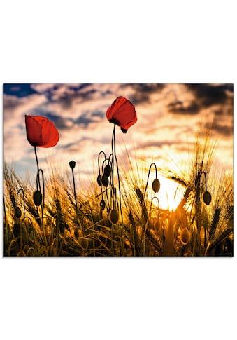 Artland Glasbild »Mohnblumen im Sonnenuntergang«, Blumen, (1 St.) kaufen