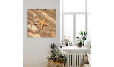 Artland Wandbild »Seestern« kaufen