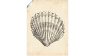 Artland Wandbild »Antike Muschel Lehre III« kaufen
