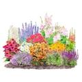 : Beetpflanzen-Set »Landhausgarten«, 12 Pflanzen