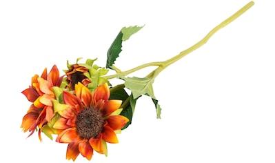 Botanic-Haus Kunstblume »Sonnenblume« kaufen