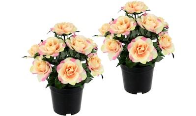 I.GE.A. Kunstblume »Rosen im Topf« kaufen