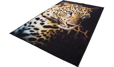 Teppich, »Leopard«, Andiamo, rechteckig, Höhe 4 mm, maschinell getuftet kaufen
