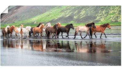 Artland Wandbild »Isländische Pferde XIV« kaufen