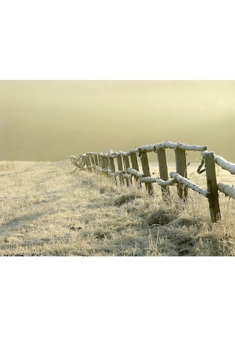 Papermoon Fototapete »Zaun im nebligen Feld«, Vliestapete, hochwertiger Digitaldruck kaufen
