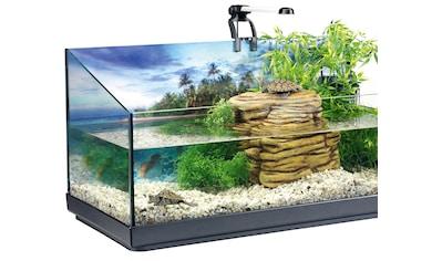 TETRA Set: Aquarien - Set »Repto«, 40 Liter, BxTxH: 40x39x77 cm, für junge Wasserschildkröten kaufen
