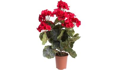 Botanic-Haus Kunstblume »Geranienbusch groß getopft« kaufen