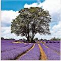 Artland Glasbild »Schönes Lavendelfeld im Sommer«, Felder, (1 St.)