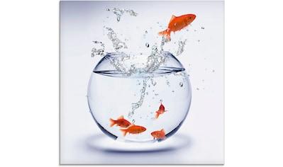 Artland Glasbild »Goldfischaquarium« kaufen