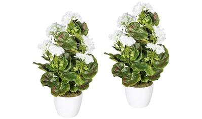 Creativ green Kunstpflanze »Geranienbusch weiß«, im Keramiktopf kaufen