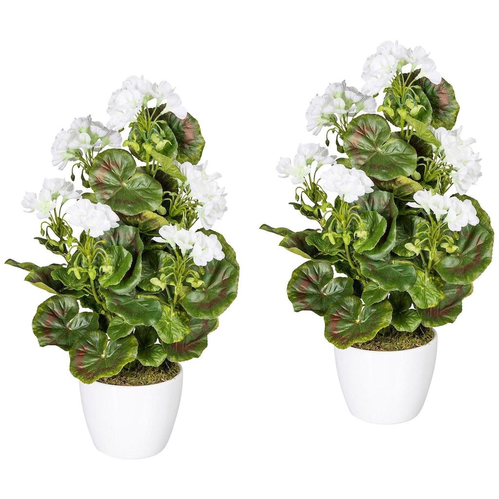 Creativ green Kunstpflanze »Geranienbusch weiß«, im Keramiktopf