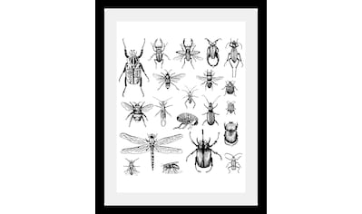 queence Bild »Käfer« kaufen
