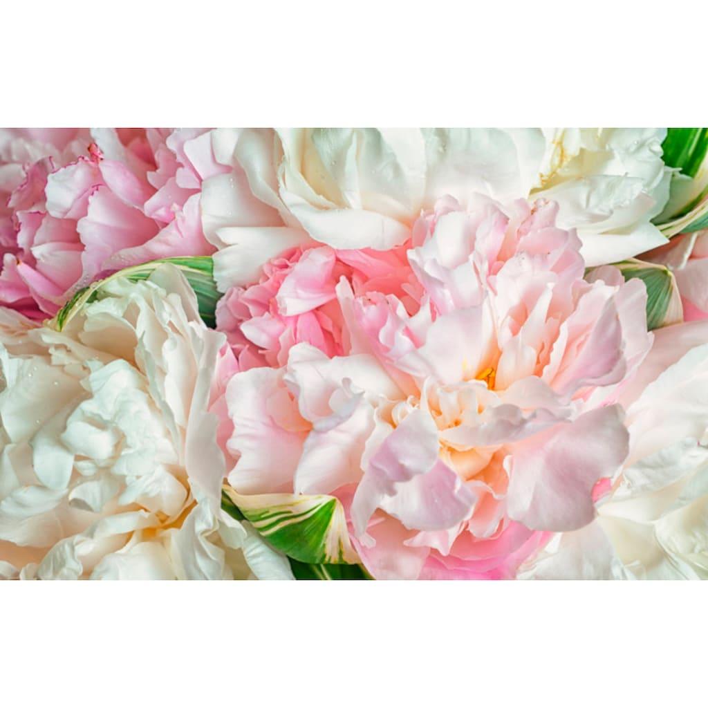 Papermoon Fototapete »Blooming Peonies«