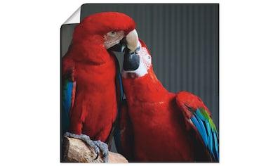 Artland Wandbild »Papageien« kaufen