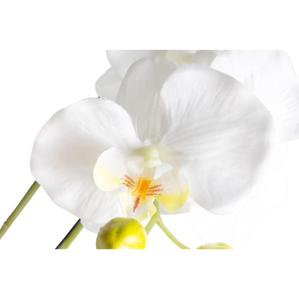 Botanic-Haus Kunstorchidee »Orchidee«