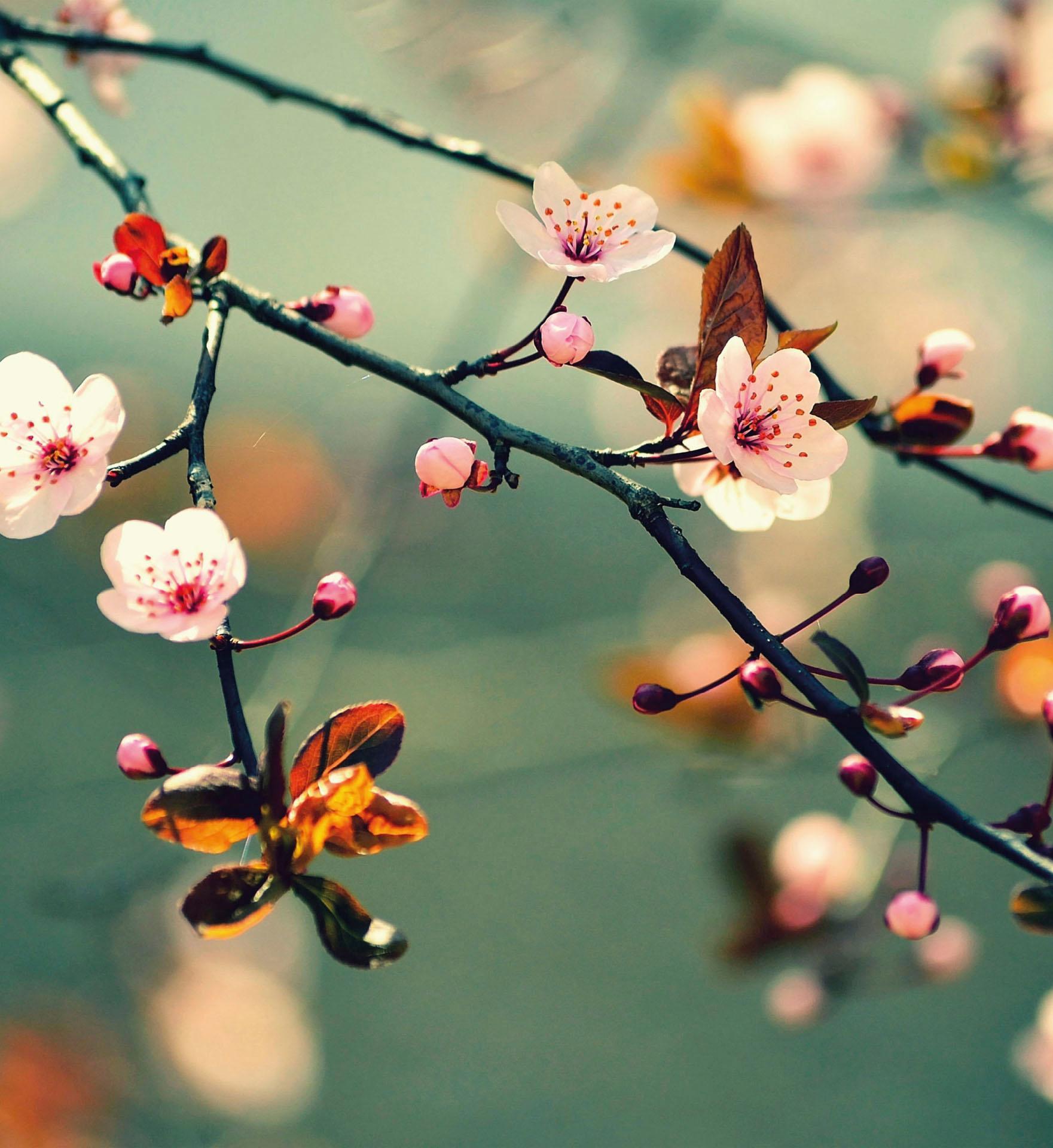 Fototapete Frühlingserwachen (farbig) Technik & Freizeit/Heimwerken & Garten/Bauen & Renovieren/Tapeten/Fototapeten/Fototapeten Blumen