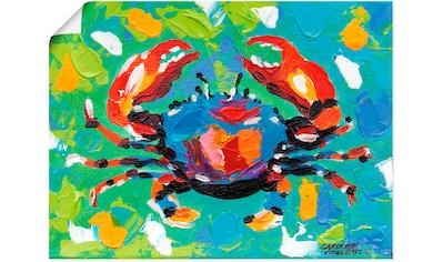 Artland Wandbild »Strand Krabbe I«, Wassertiere, (1 St.), in vielen Größen & Produktarten - Alubild / Outdoorbild für den Außenbereich, Leinwandbild, Poster, Wandaufkleber / Wandtattoo auch für Badezimmer geeignet kaufen