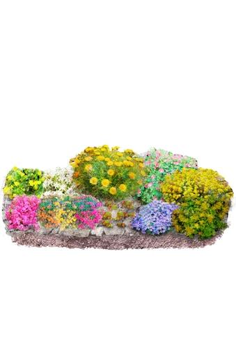Pflanzenset »Bunter Steingarten«, 12 Pflanzen kaufen