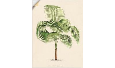 Artland Wandbild »Palme I«, Pflanzen, (1 St.), in vielen Größen & Produktarten -... kaufen