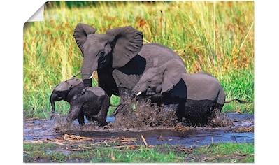 Artland Wandbild »Elefantenfamilie« kaufen