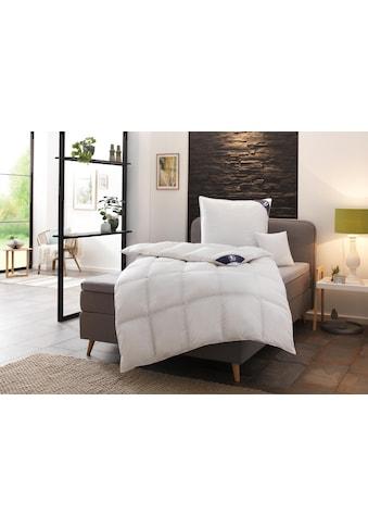 Daunenbettdecke, »Exklusiv«, SPESSARTTRAUM, Füllung: 100% Daunen, Bezug: 100% Baumwolle kaufen