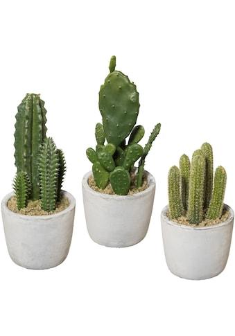 Creativ green Kunstkaktus (Set, 3 Stück) kaufen