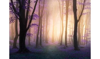 Papermoon Fototapete »Mystic Fogga Forest« kaufen