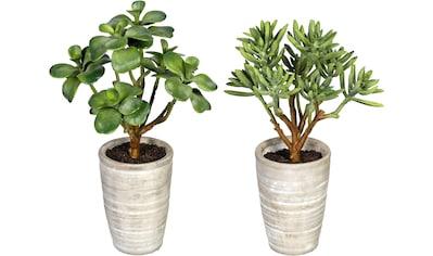 Creativ green Künstliche Zimmerpflanze »Sukkulenten Kalanchoe und Aloe«, im... kaufen
