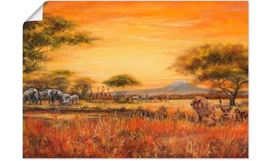 Artland Wandbild »Afrikanische Steppe mit Löwen« kaufen