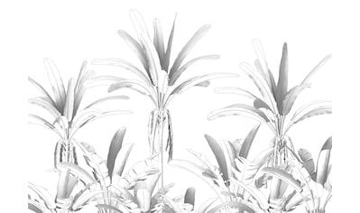 KOMAR Packung: Fototapete »Musa«, aus Vlies kaufen