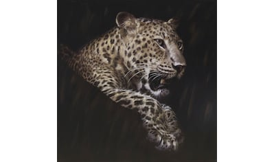 Spiegelprofi GmbH Ölbild »Leopard«, (1 St.) kaufen