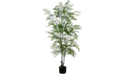Creativ green Kunstpflanze »Adianthum«, im Kunststofftopf kaufen