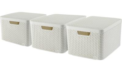 Curver Aufbewahrungsbox »Style Box L«, (Set, 3 St.), creme kaufen