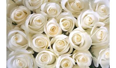 PAPERMOON Fototapete »White Roses«, Vlies, in verschiedenen Größen kaufen