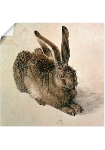 Artland Wandbild »Junger Feldhase. 1502« kaufen