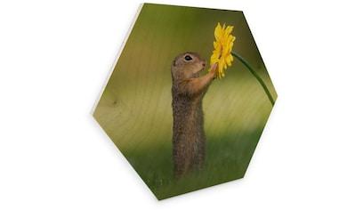 Wall-Art Holzbild »Eichhörnchen Holzbild Blumen«, (1 St.) kaufen